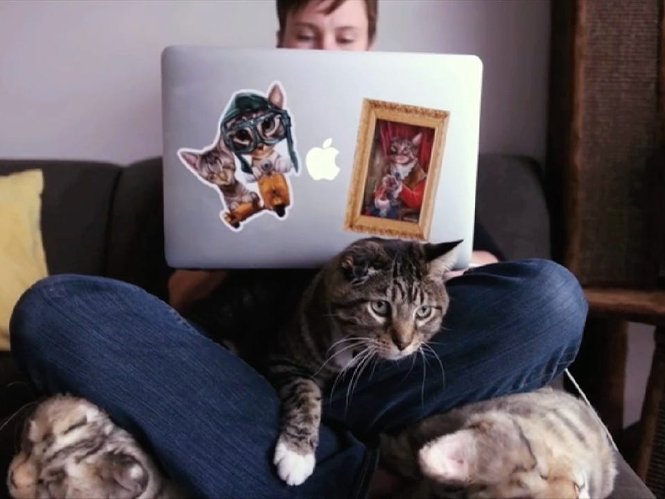 "A cat's place is in the way, as shown in this clip from the 2019 edition of ""CatVideoFest."""