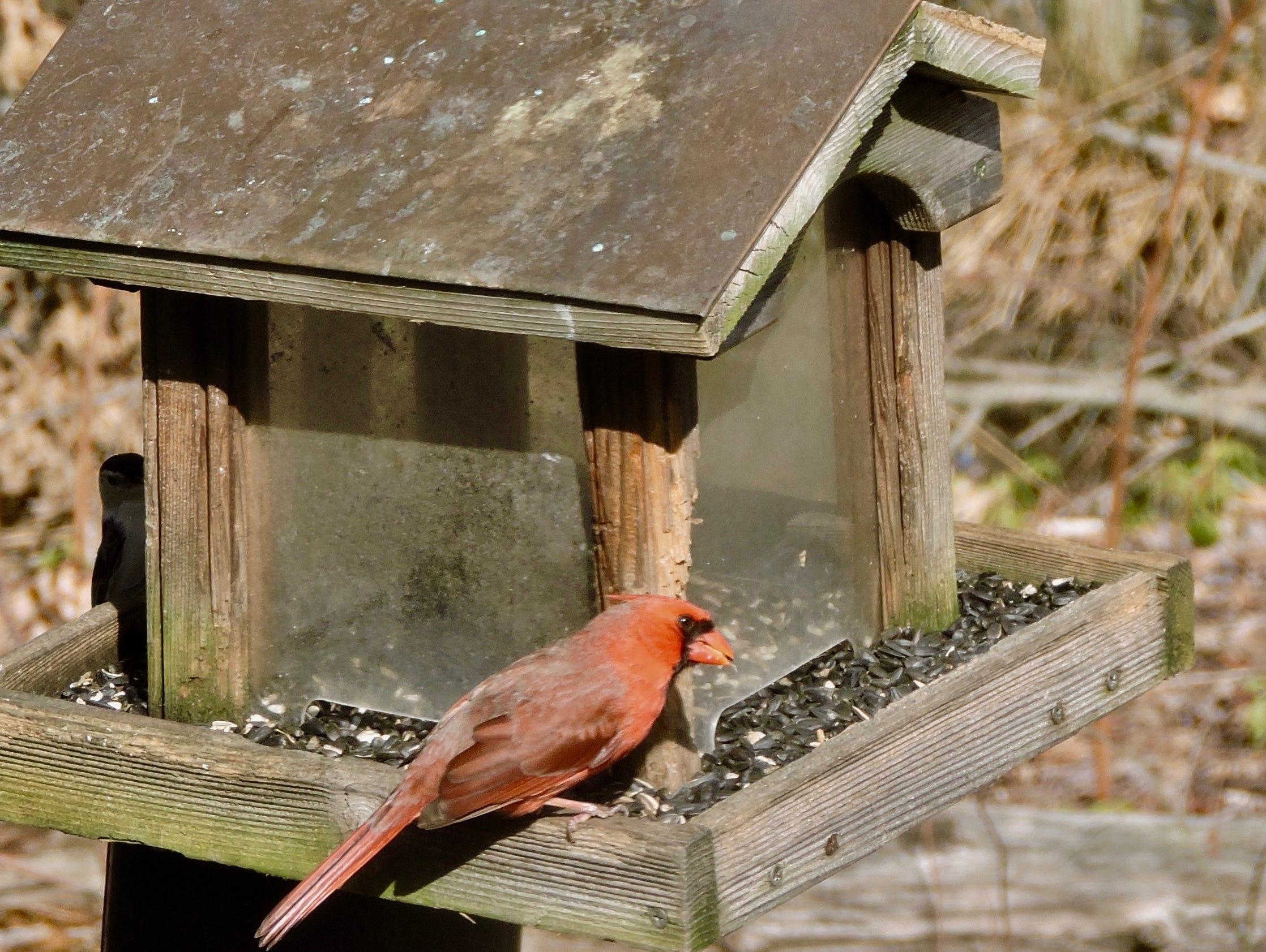 Saying goodbye to old backyard bird feeder