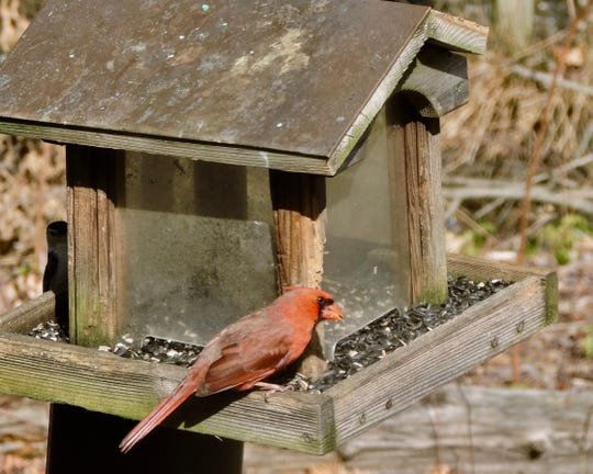 Jim Wright recently had to say goodbye to his birdfeeder.