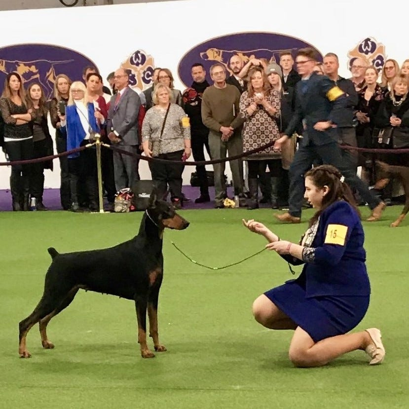 This high school freshman competed in the Super Bowl of dog-handling shows