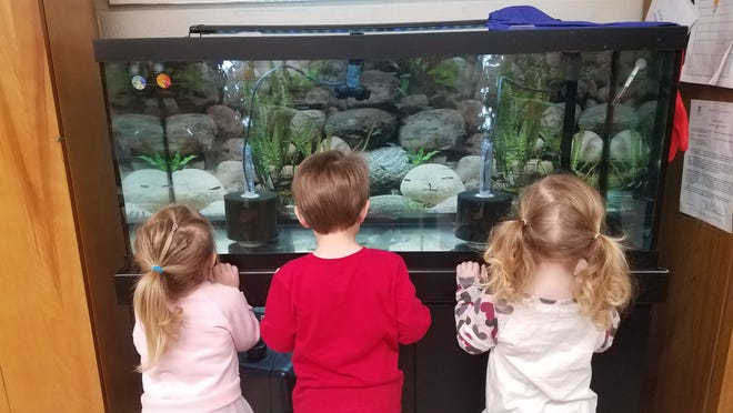 The Salmon in the Classroom program gives students the chance to raise salmon and release them in waterways near their school.