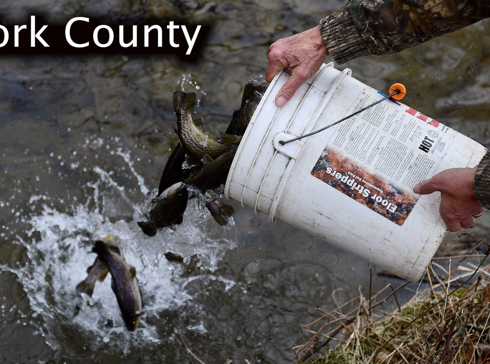 York County trout stocking schedule