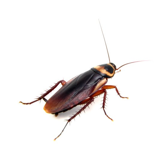 Cockroaches cited among one restaurant's health inspection violations