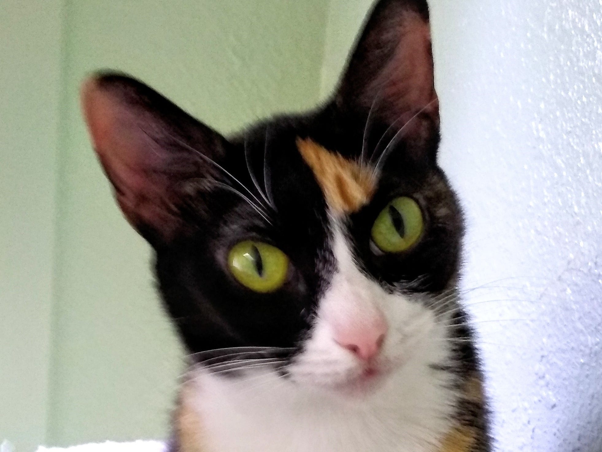 Little One is a 4-year-old beautiful calico. Little One is friendly, affectionate and mellow. She likes cats and children 10 and older. No dogs, please. For more information, visit www.sfof.org or call 503-362-5611.