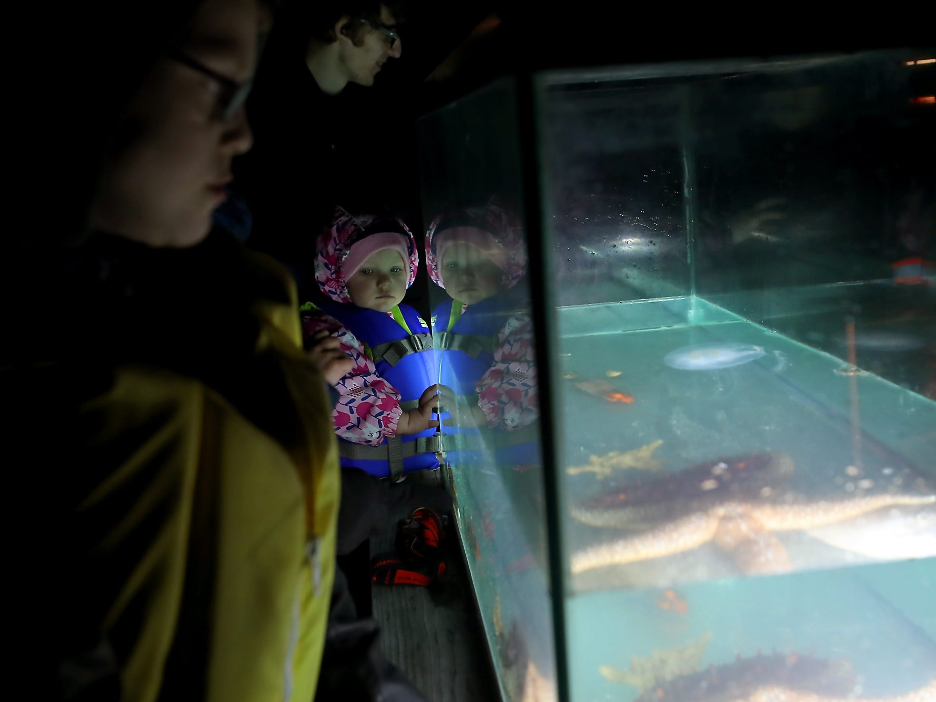 Caroline Stottlemyer, 2, watches the creatures in the tank during the Night Time Pier Peer at the Brownsville Marina on Friday, March 1, 2019.
