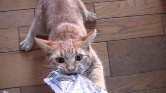 Videos capturing cats at their best, worst and cutest arrive at the DFT this weekend.