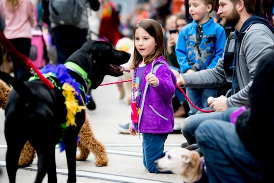 A spectator greets dogs at the annual Mardi Growl in downtown Knoxville, Tennessee on Saturday, March 2, 2019.