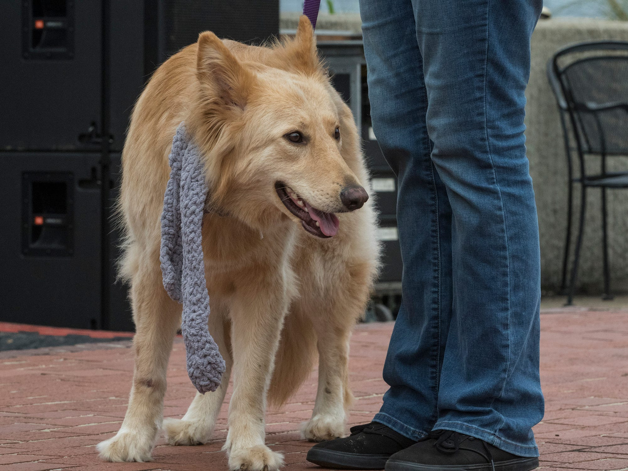 Woofstock was held at the Rivermarket in downtown Monroe, La. on March 2. The event was featured live music and vendors with proceeds going to S.O.S.