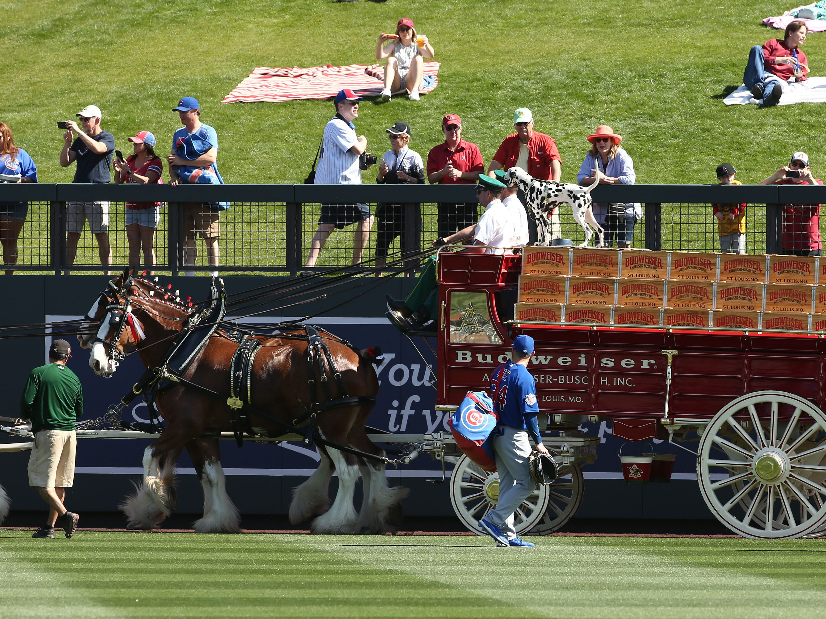 The Budweiser Clydesdales make an appearance at the Arizona Diamondbacks spring training game on Mar. 1, 2019 at Salt River Fields in Scottsdale, Ariz.