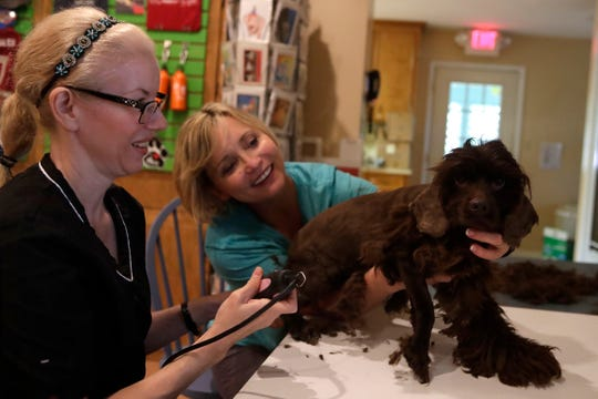 Bambi gets a hair cut from Jenny Mergenthaler while Jodi Sperry holds her still Saturday, March 2, 2019. The Leon County Humane Society took in 76 dogs from a puppy mill in south Ga. over the weekend.