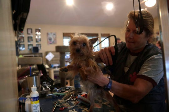 Suzi gets groomed by Mary Ellen Zydell Saturday, March 2, 2019. The Leon County Humane Society took in 76 dogs from a puppy mill in south Ga. over the weekend.
