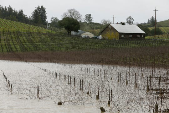 A vineyard along River Road was f flooded on Wednesday near Forestville, Calif. A river in Northern California's wine country has reached flood stage and forecasters expect it to rise even more as a winter storm lashes the region.