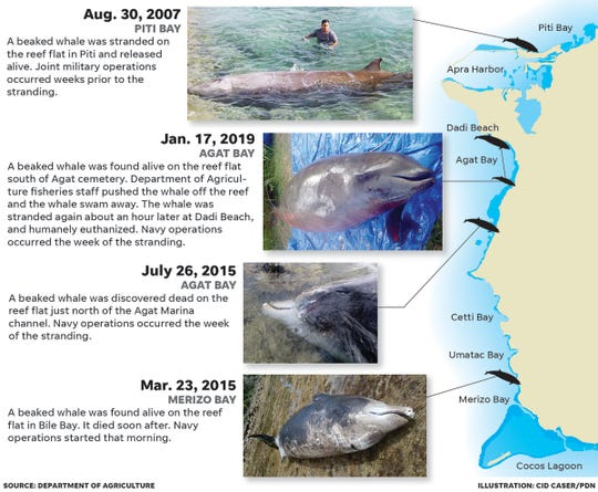 Six beaked whales have washed up on Guam's shores since 2007, according to the Guam Department of Agriculture. Four of these incidents, depicted in the graphic, occurred within days of Navy operations.