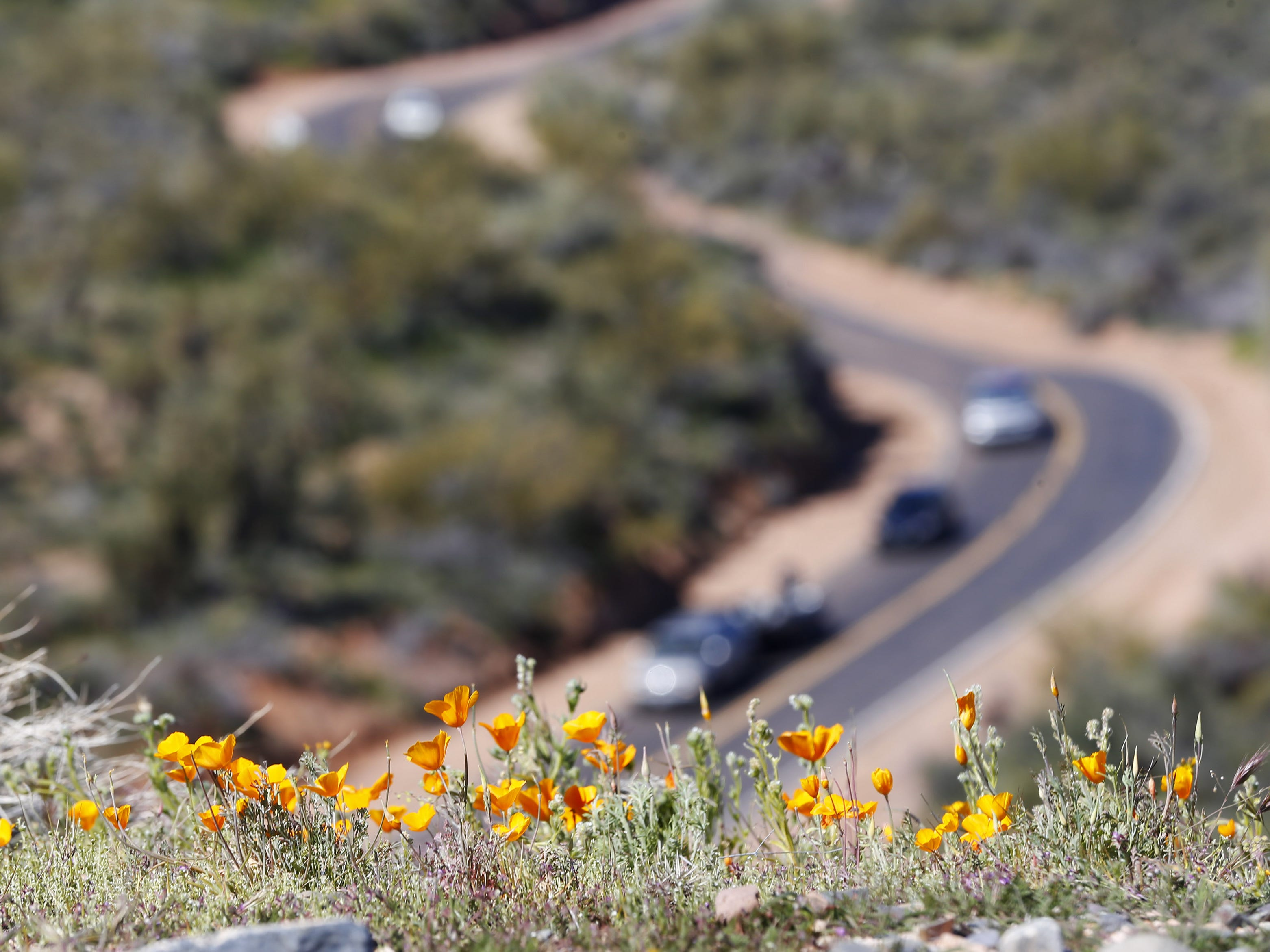 Wildflowers bloom on a hill over Bartlett Dam Road near Bartlett Lake on March 3, 2019.