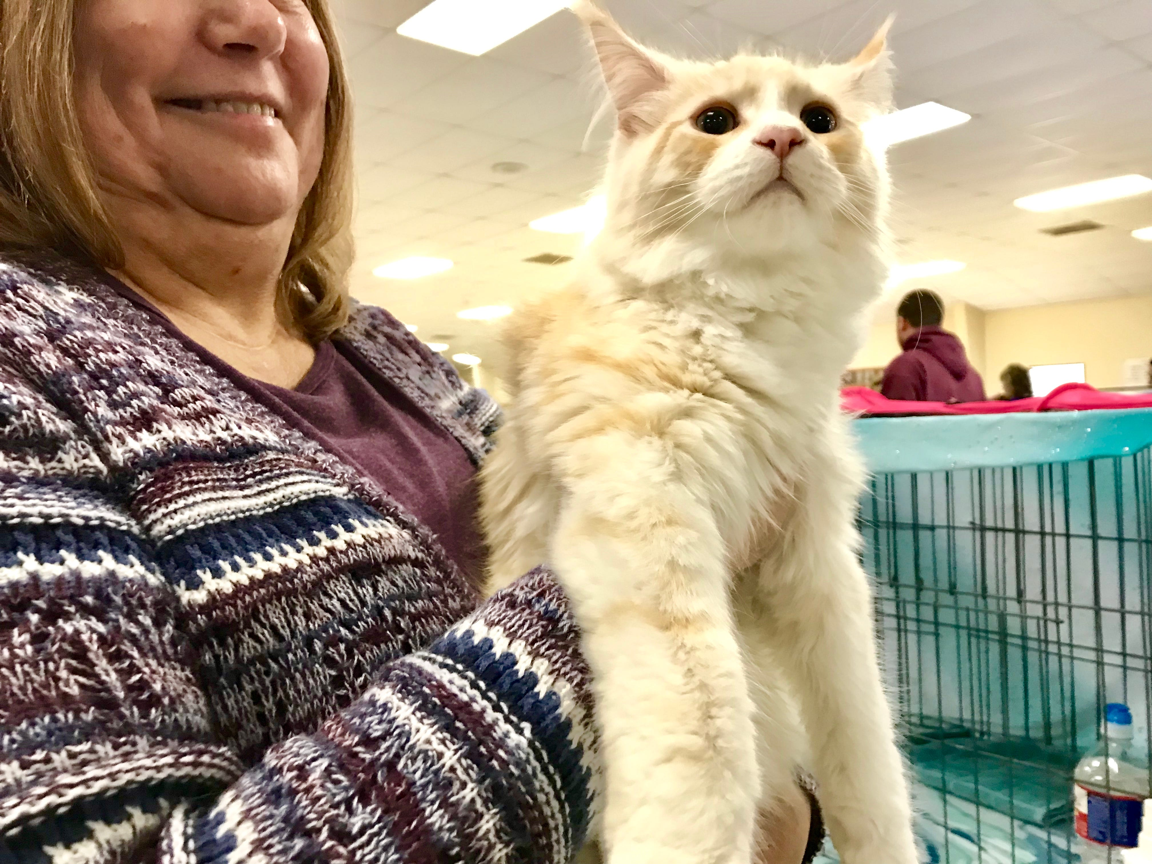 """Lois Gollmore, of Willard, holds Maine Coon Wild Pride Einstein Divine, of the LJ Cool Catz, during """"The Art of Cats"""" show presented by South Central Rendezvous Cat Club at the Branson-Hollister Lions Club March 3."""
