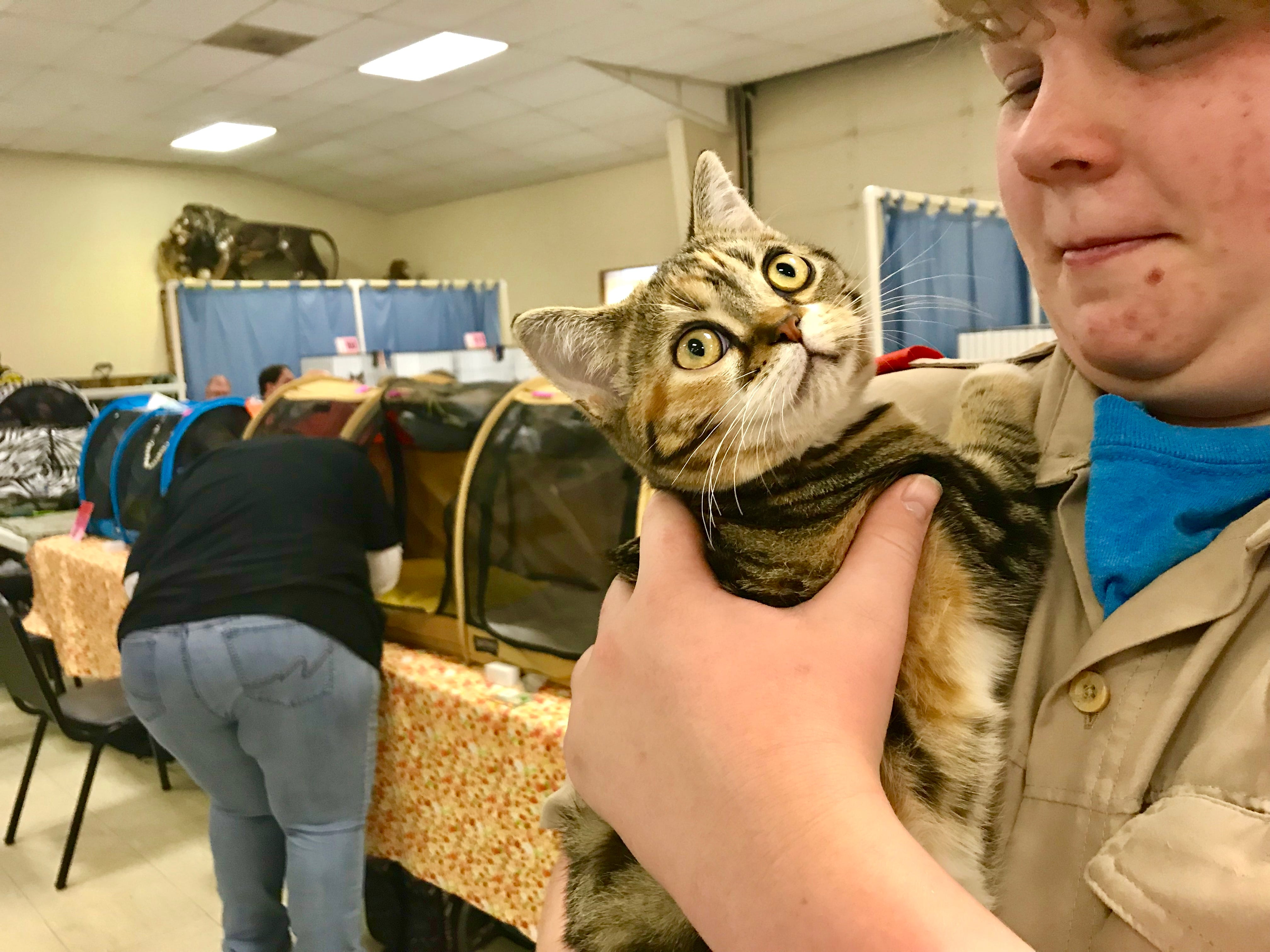 Josef Collins, of Scout Troop 290, holds GAHLee Reba Mac-N-Tire,  a brown patched tabby, during a cat show at the Branson-Hollister Lions Club.
