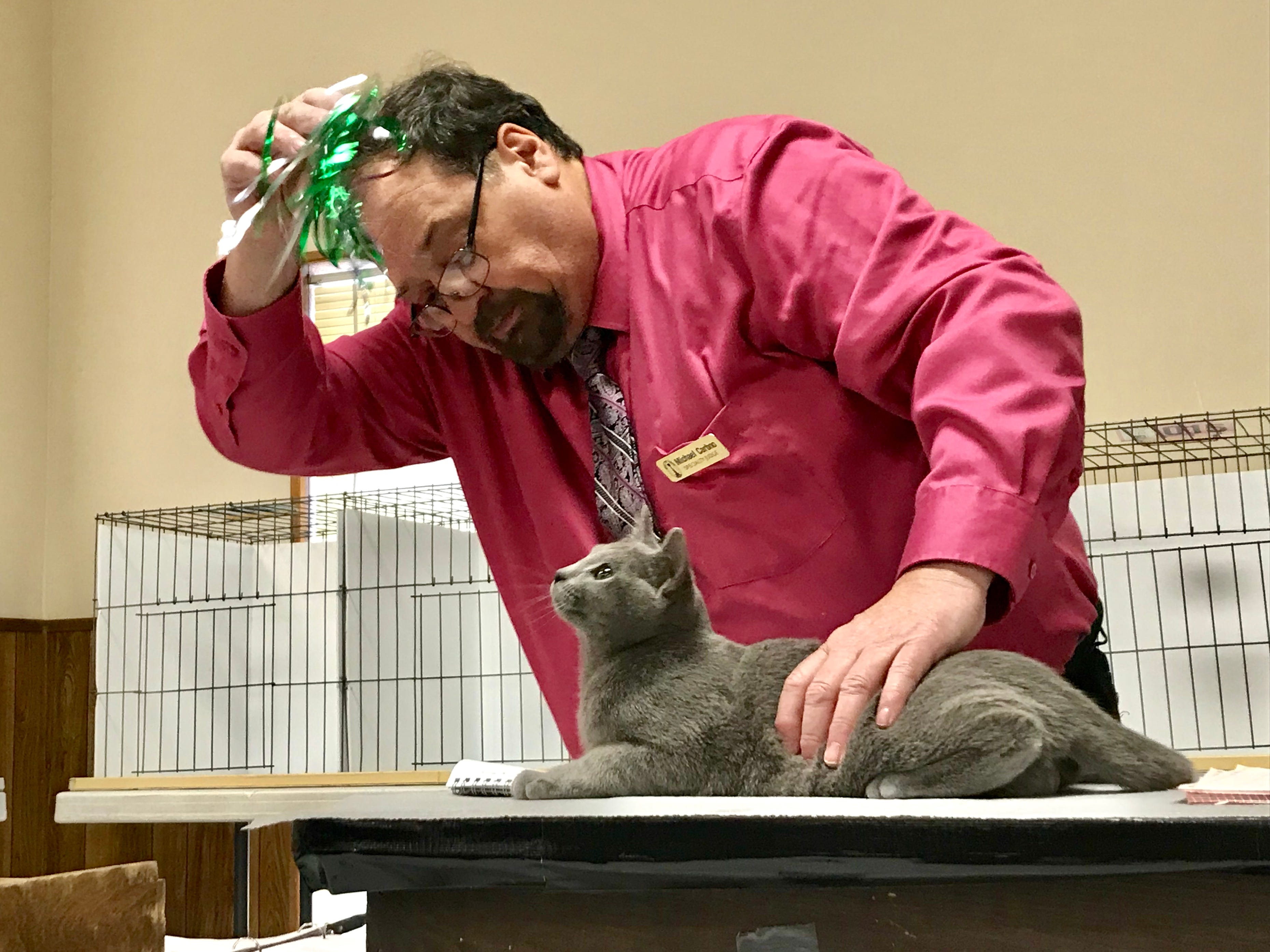 """Mike Carbno judges a cat during """"The Art of Cats"""" show March 3 at Branson-Hollister Lions Club."""