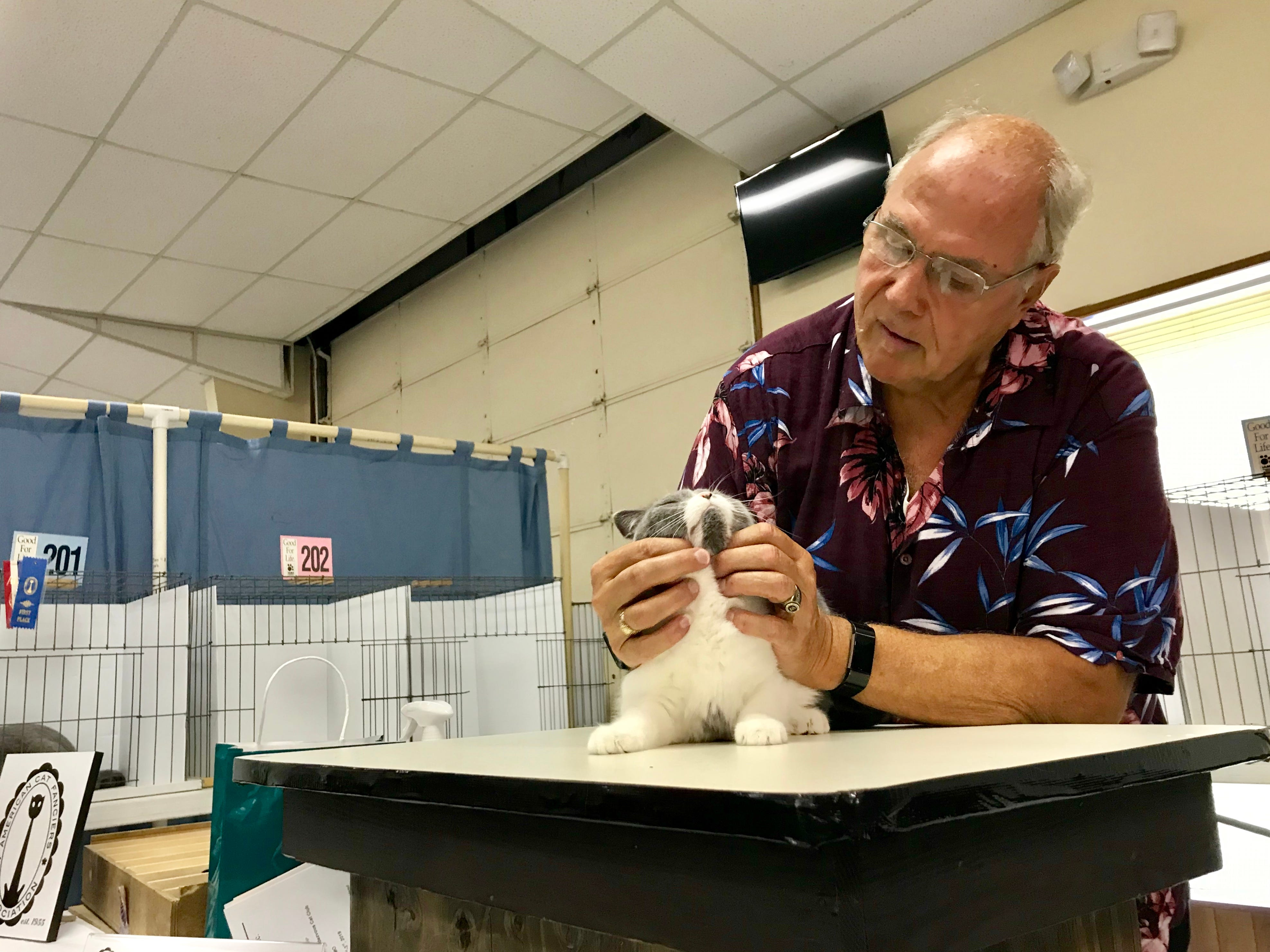 Donald Finger judges a feline during a cat show March 3 at the Branson-Hollister Lions Club.