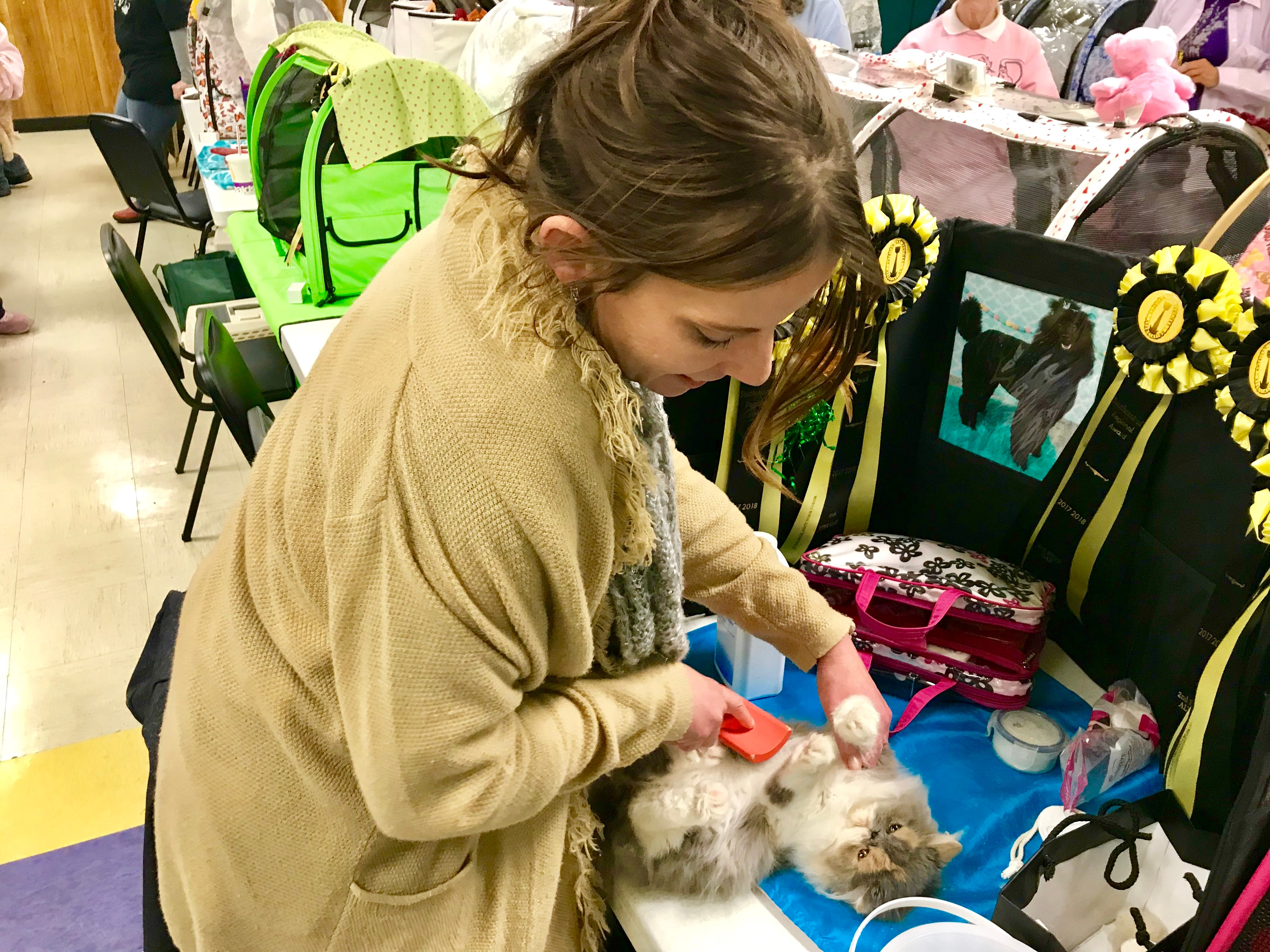 """Laura Mays brushes Molly, an exotic longhair, in the benching area of """"The Art of Cats"""" show March 3."""
