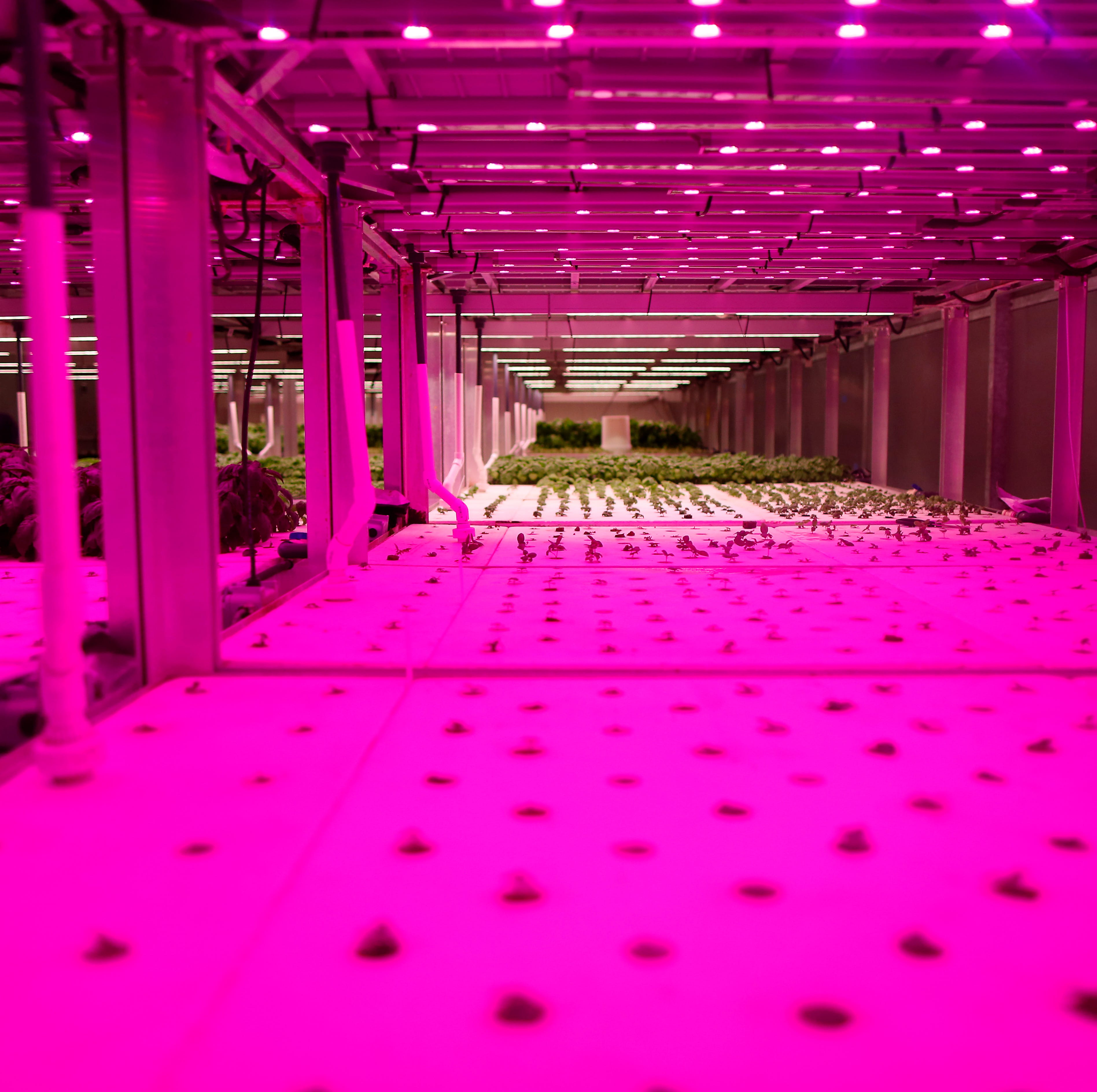 Hydroponic indoor farming is the future of local food