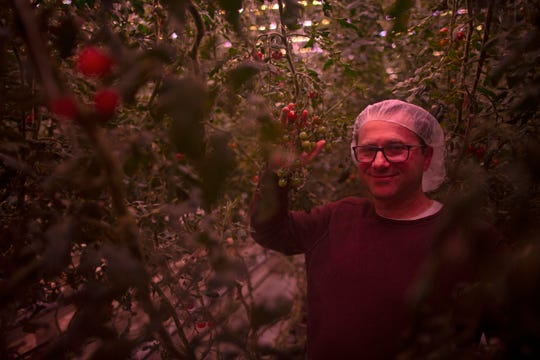 CEO Mike Zelkind poses inside a room of vertically grown tomatoes under grow lights at 80 Acres Farms in the Spring Grove Village neighborhood of Cincinnati on Thursday, Feb. 28, 2019.