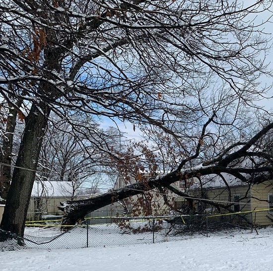 Edison woman, son escape home as tree falls onto roof during snowstorm