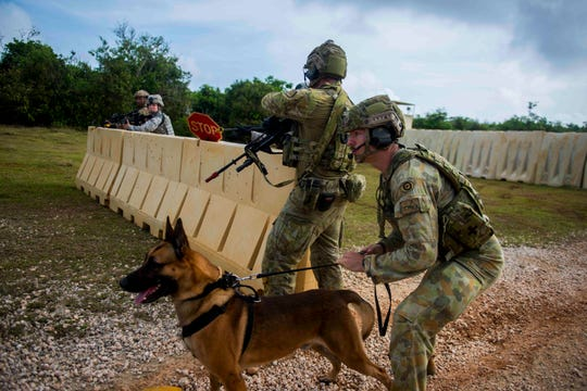A Royal Australian Air Force military working dog handler holds his dog back during a multilateral security forces field training exercise during COPE North Feb. 21, 2019, at Andersen Air Force Base, Guam. COPE North is an annual multilateral U.S. Pacific Air Forces-sponsored field training exercise focused on combat air forces large-force employment and mobility air forces humanitarian assistance and disaster relief training to enhance interoperability among U.S., Australian and Japanese forces. (U.S. Air Force photo by Senior Airman Isaac Johnson)