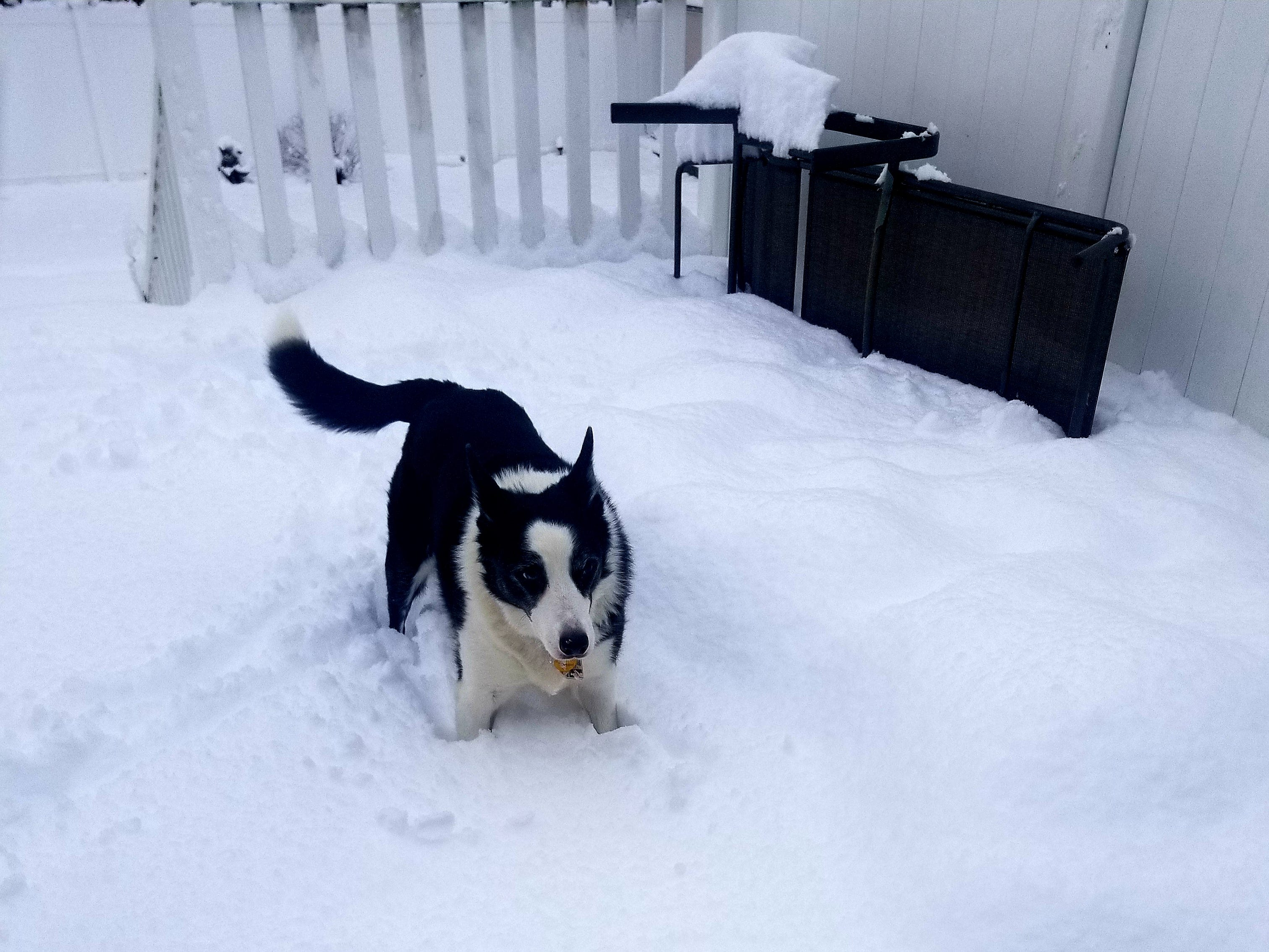 Sophie takes to the snow on Winding Way in Cedar Grove.