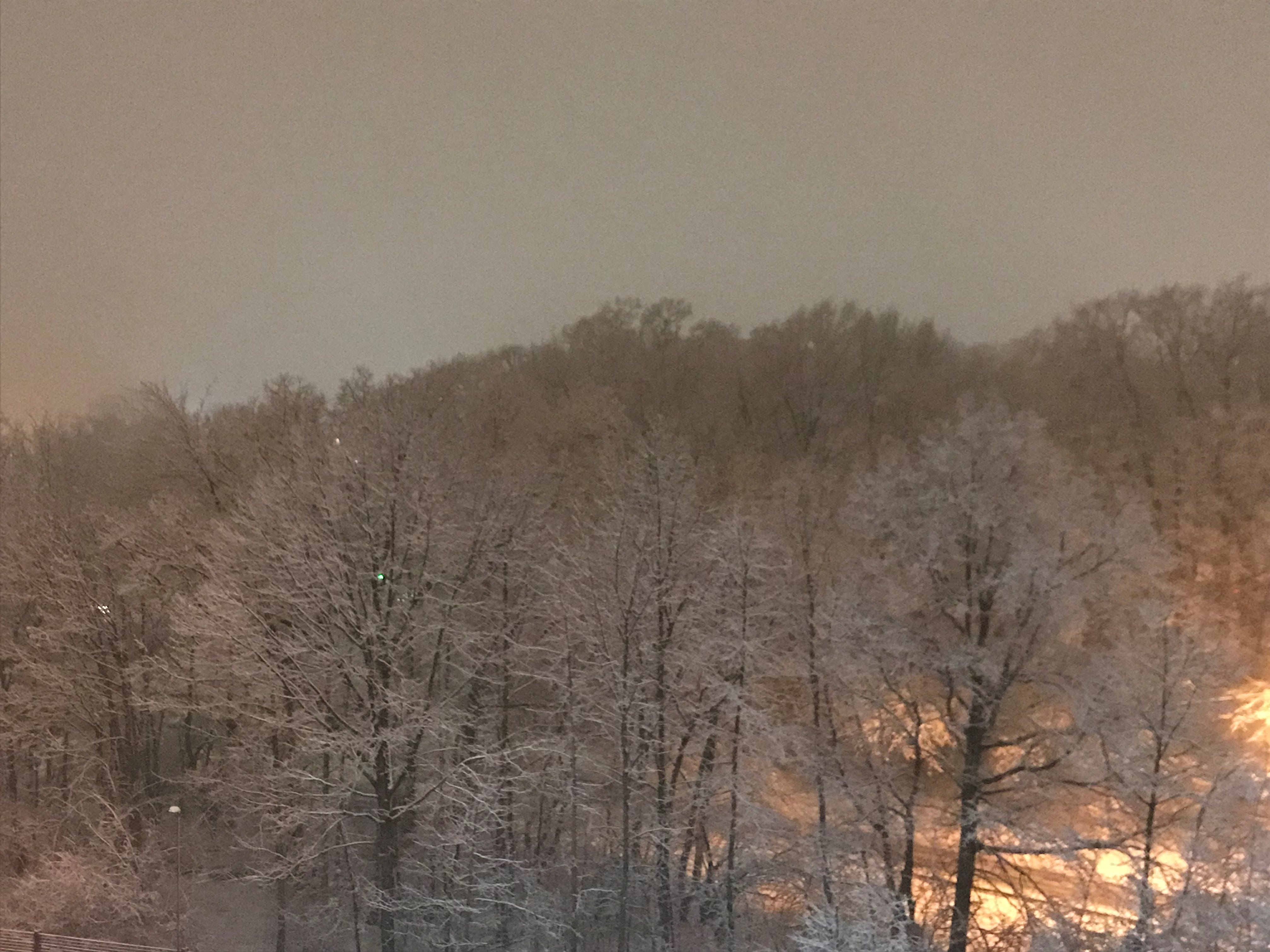 Snow-covered treeline in Clifton NJ.