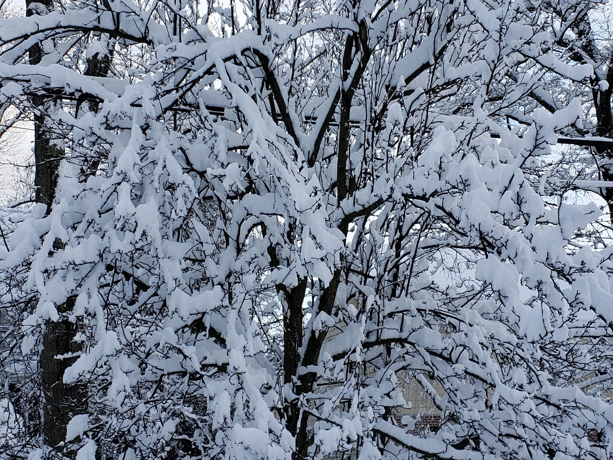 Verona's Newman Avenue residents woke up to quite a few inches of snow on Monday.