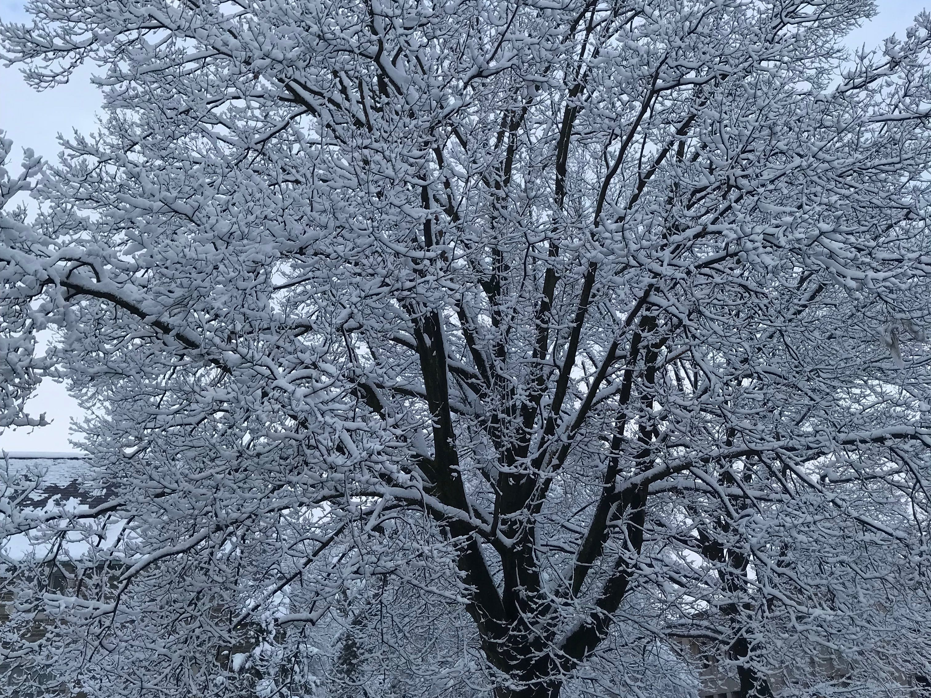 Trees laden with snow in Montclair.