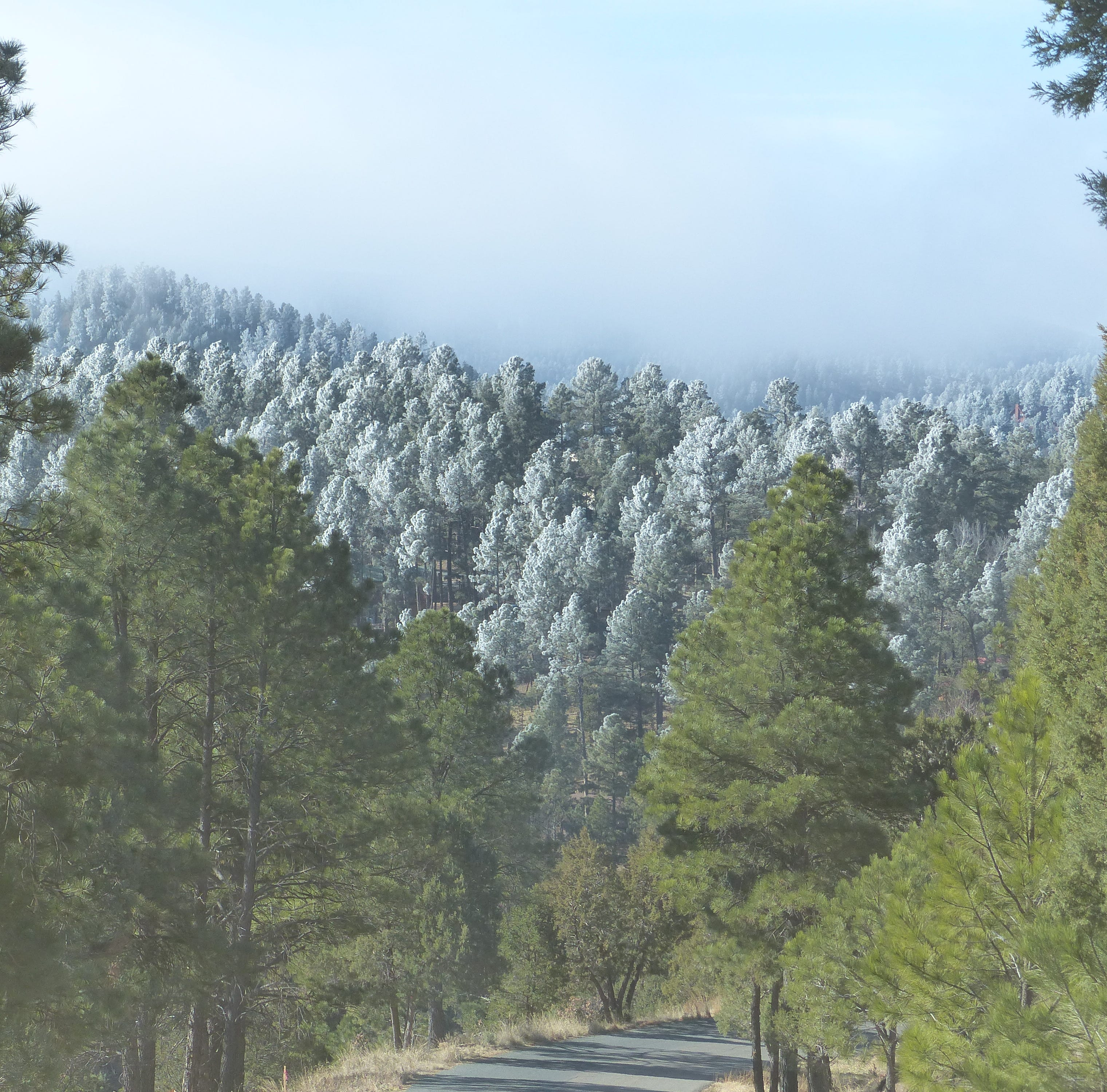 Frost replaces snow on Ruidoso's mountain trees