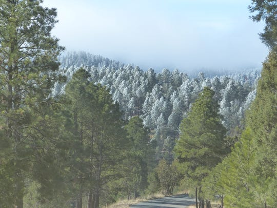 Frost coated trees on a mountainside in Ruidoso Monday morning.