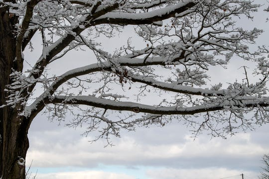 Snow weighs on a tree in York March 4, 2019 while a blue sky tries to break through.