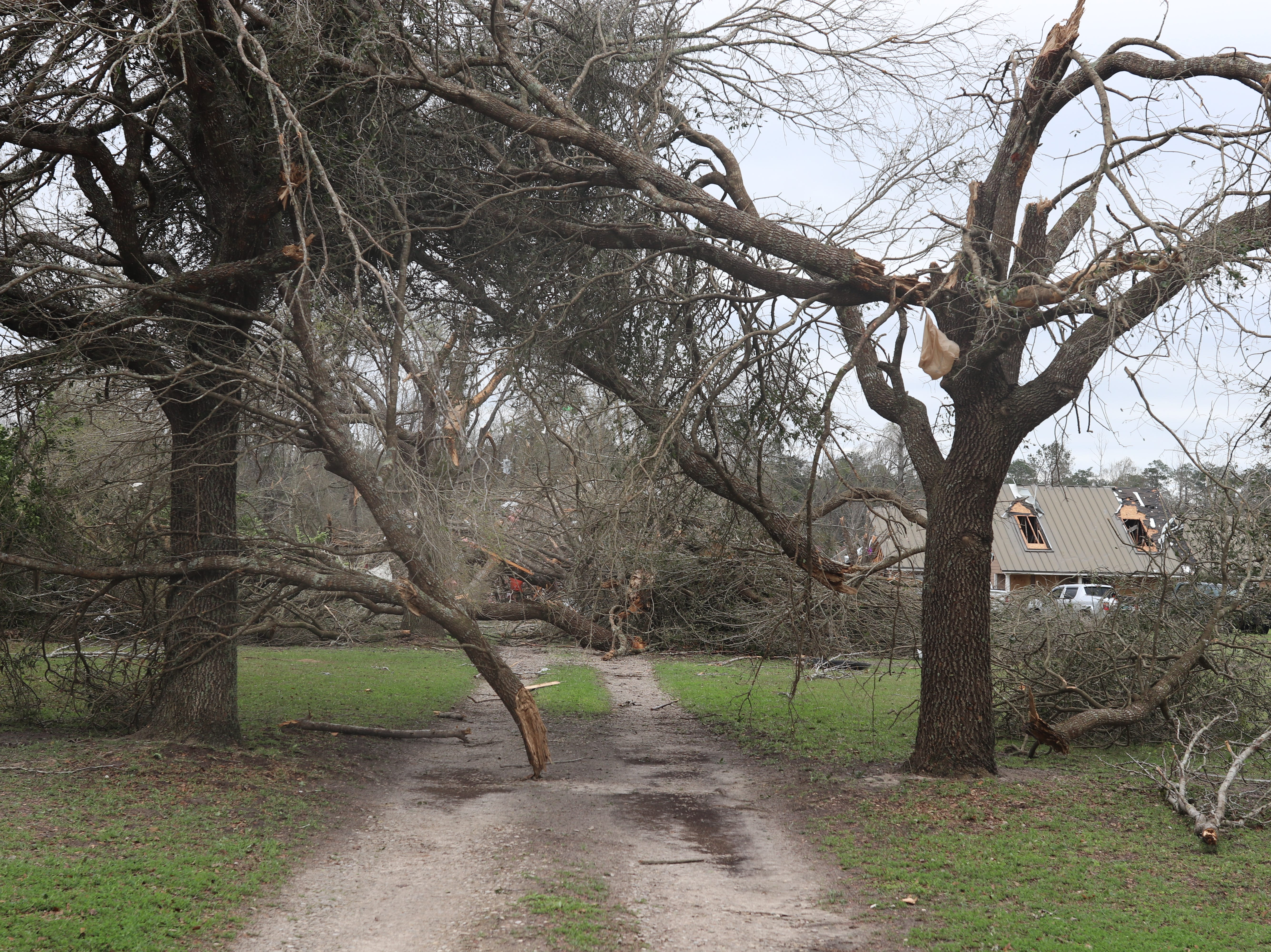 A driveway is blocked by downed trees in the Baum Community after a tornado hit Sunday March 3.