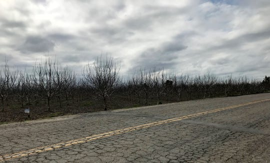 An orchard near the 19700 block of Hosfield Drive in Tulare where a body was found by Tulare County sheriff's deputies on Sunday, March 3, 2019.