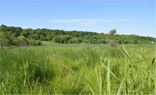 Caleb and Eva's sedge meadow.
