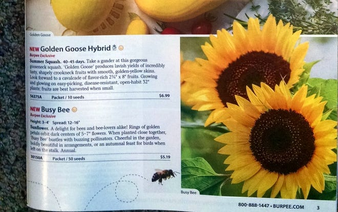 So many ways to enjoy gardening. Selecting seeds from a seed catalog is but one way.