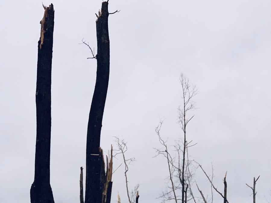 Tornado damage in Lee County, Ala. on March 3, 2019.