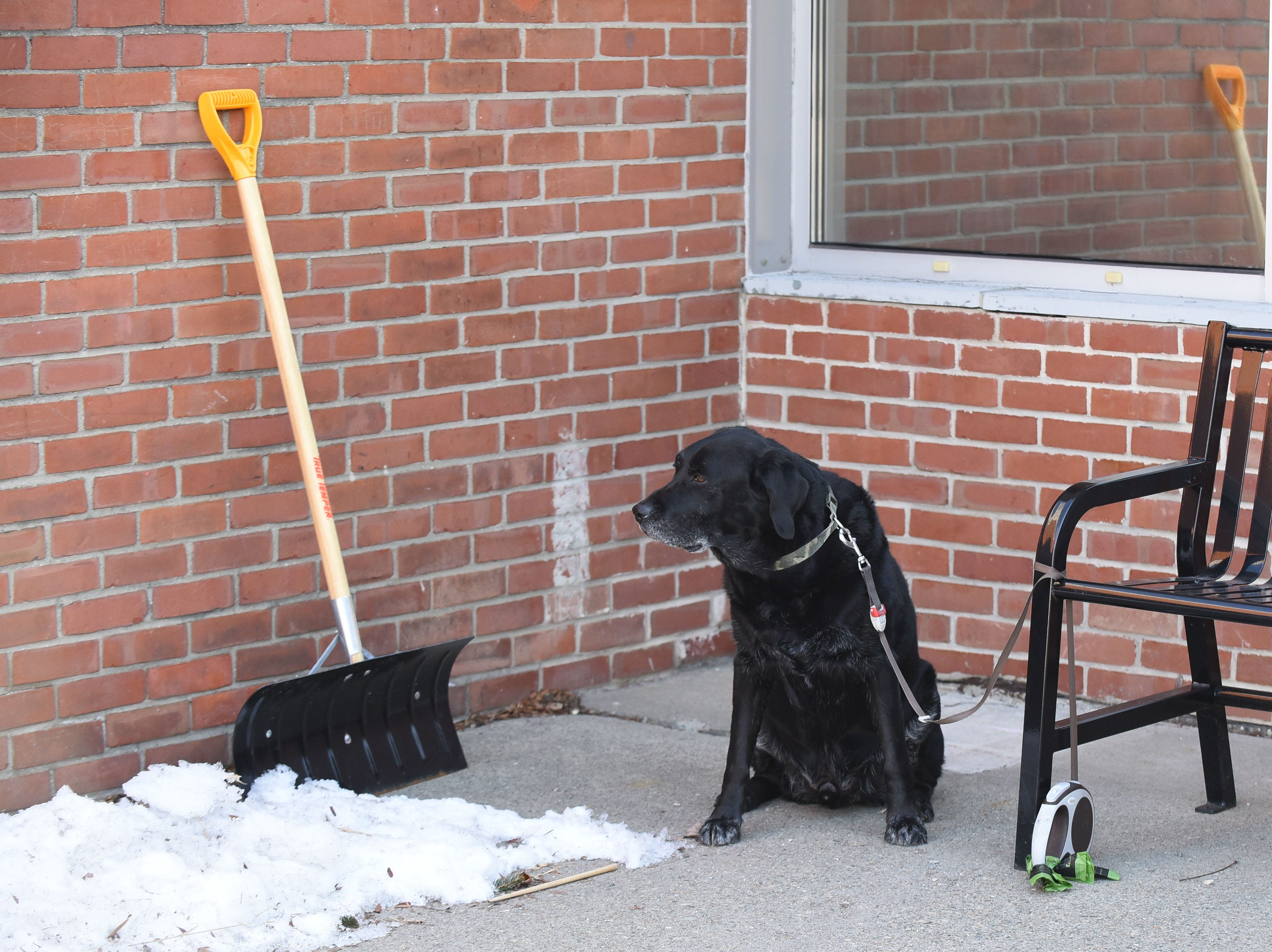 Jake waits outside Orchard School in South Burlington while his owner votes on Town Meeting Day, Tuesday, March 5, 2019. Jake is a good boy.