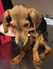 This is the dog that authorities say was starved, covered in sores and filthy when it was dumped at the Sharonville SPCA. They don't know if it will survive.