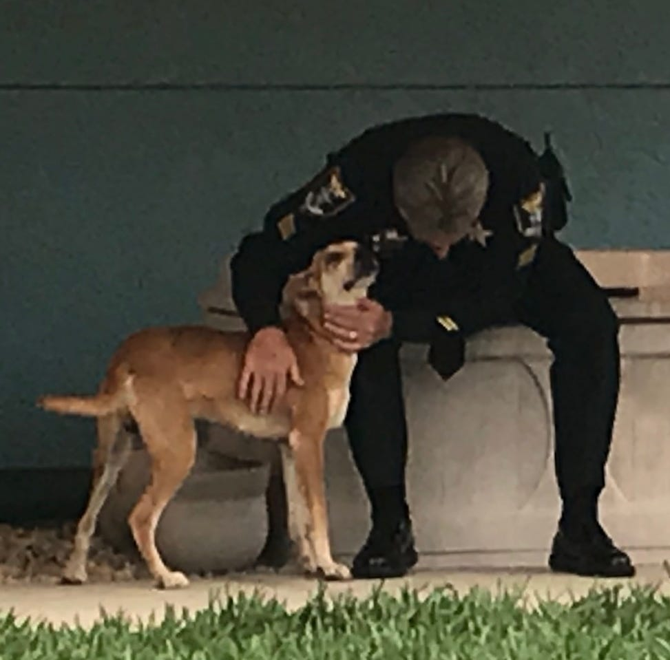 Reward now $8,000 for information on dog found in Lehigh Acres with muzzle taped closed