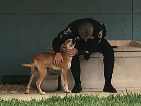 Chance, the Florida cur breed found wandering around Lehigh Acres Thursday with his muzzle taped shut, is recovering nicely at Lee County Domestic Animal Services.