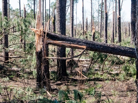 Trees sheared off in Beauregard, Ala., on Tuesday March 5, 2019. A fatal tornado struck Beauregard on Sunday afternoon.