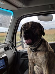 Ashanti, pet of Jeddo resident and truck driver Nick Gray, sits in Nick's truck as he drives.