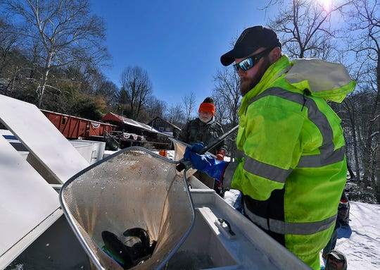 D.J. Beckey, a fish culturist with the PA Fish and Boat Commission scoops up nets full of brown and rainbow trout to be stocked by volunteers from local sportsman's groups in Muddy Creek in southeastern York County, Tuesday, March 5, 2019. The stocking was the first of several that will happen before trout season opens on March 30.