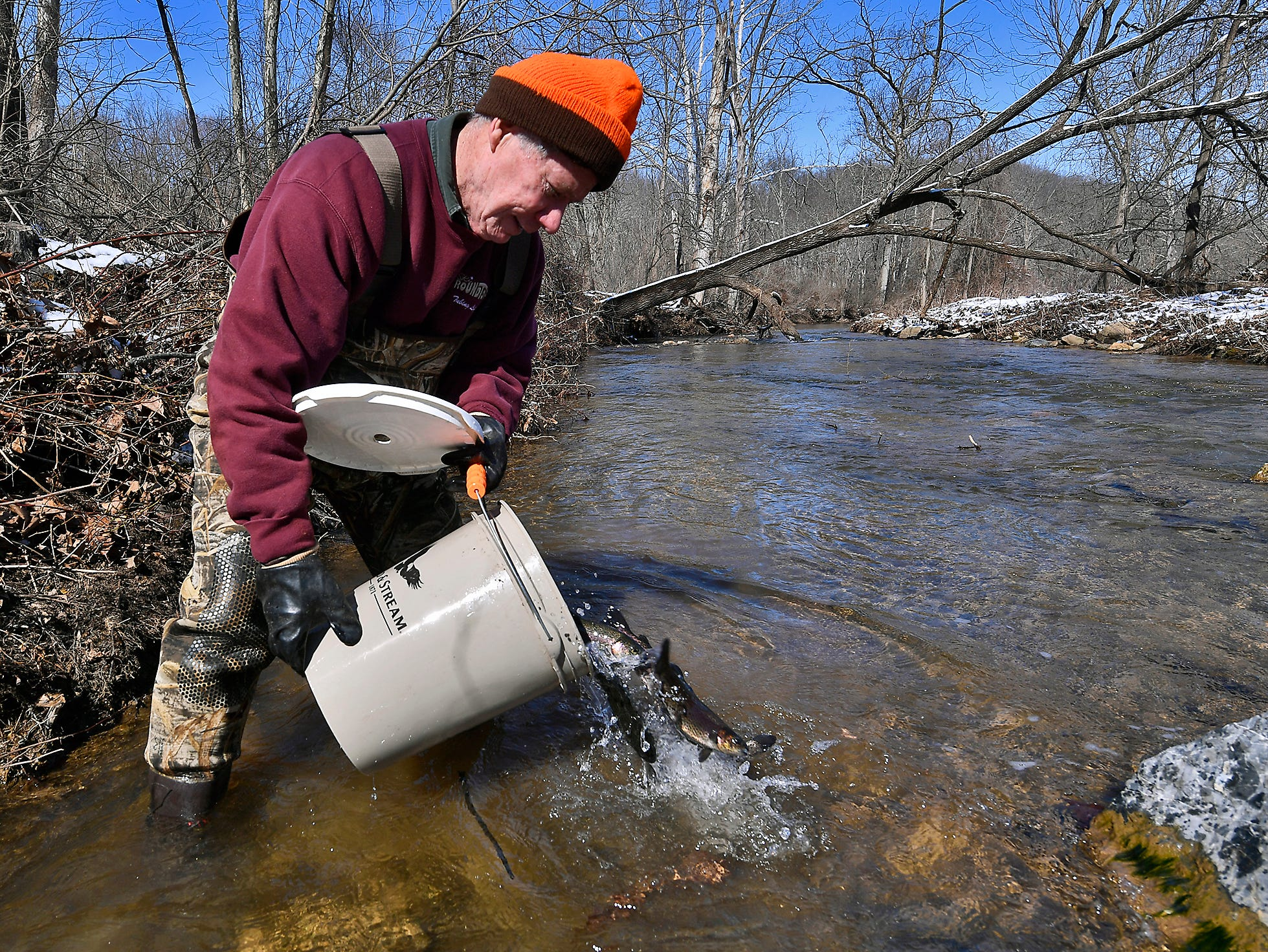 Volunteer Jim Clark of York dumps a bucket of brown and rainbow trout into Bald Eagle Creek, Tuesday, March 5, 2019. The stocking was the first of several that will happen before trout season opens on March 30.John A. Pavoncello photo