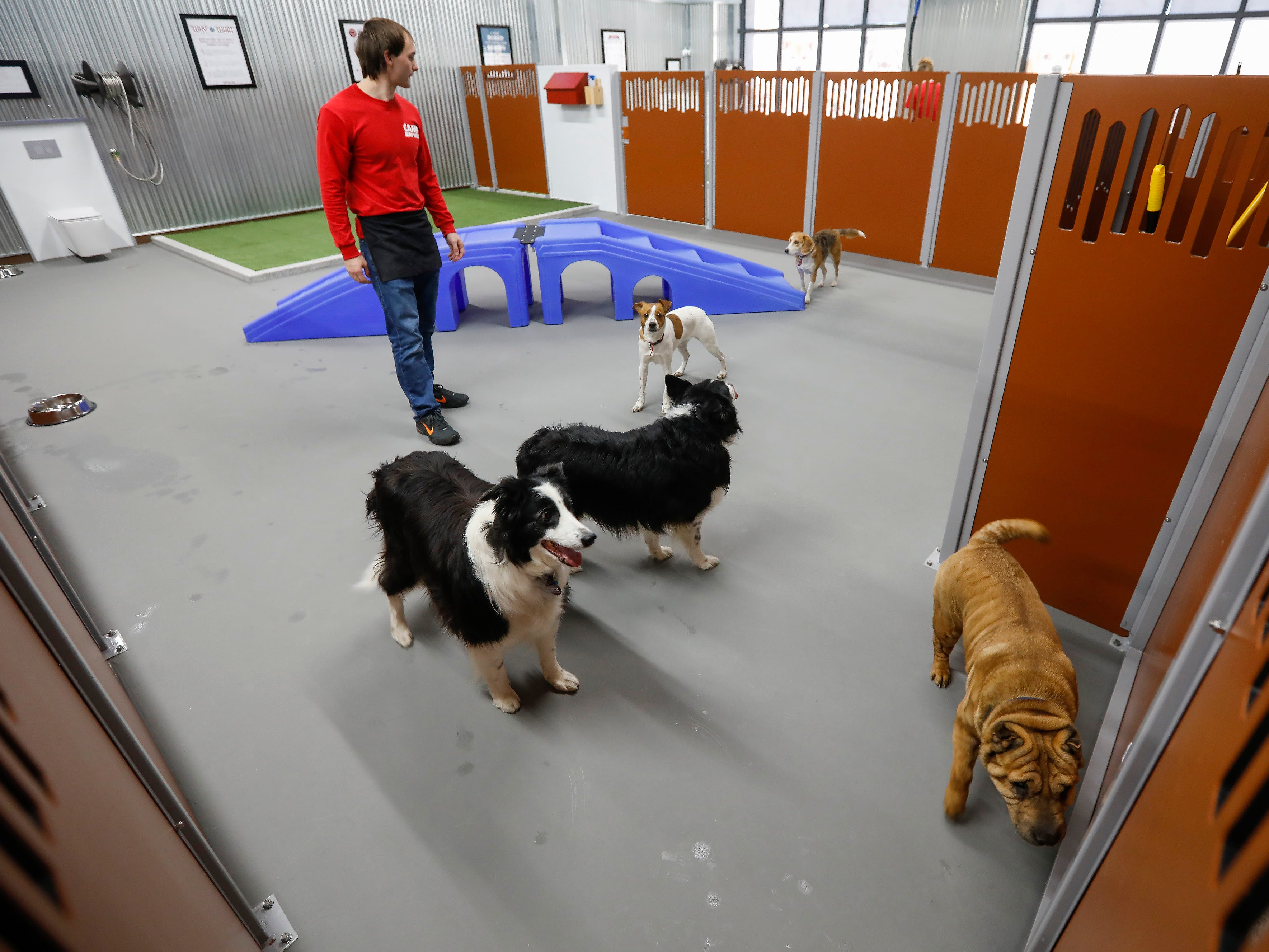 Ian Harms, a camp counselor at the new Camp Bow Wow located at 2814 S. Fremont Ave., Suite 104., keeps an eye on the larger dogs as they socialize together in the play area.