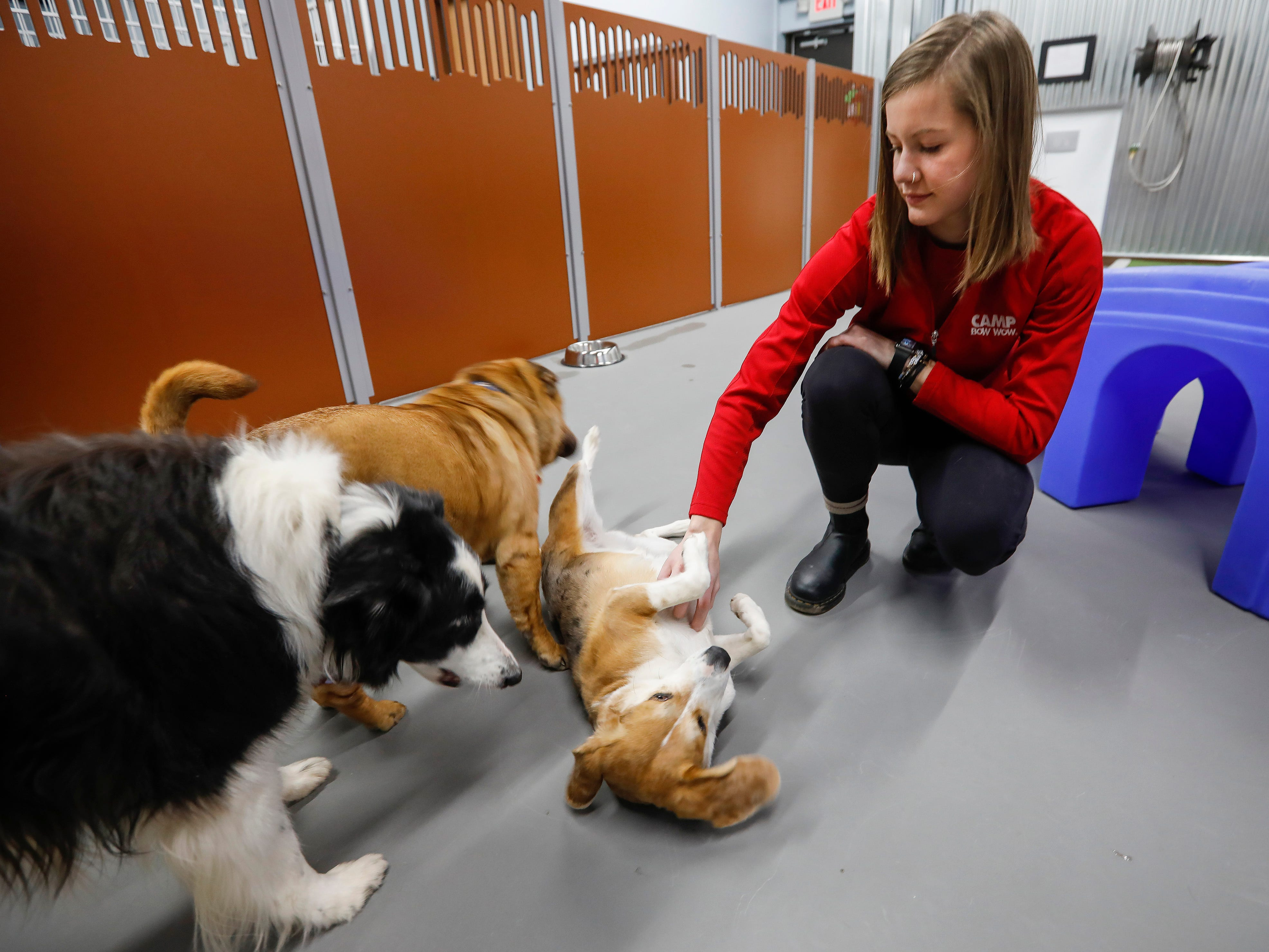 Lupine gets a belly rub from Assistant Manager Valerie Rooney at the new Camp Bow Wow located at 2814 S. Fremont Ave., Suite 104.