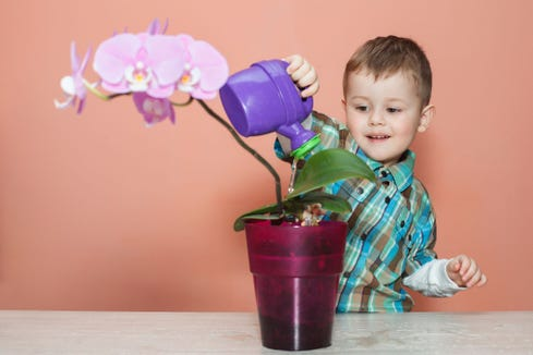Orchid children are defined as sensitive children who thrive on routine.